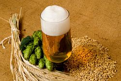 Компоненты пива хмель дрожжи вода